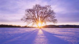 winter_daybreak_hokkaido_japan